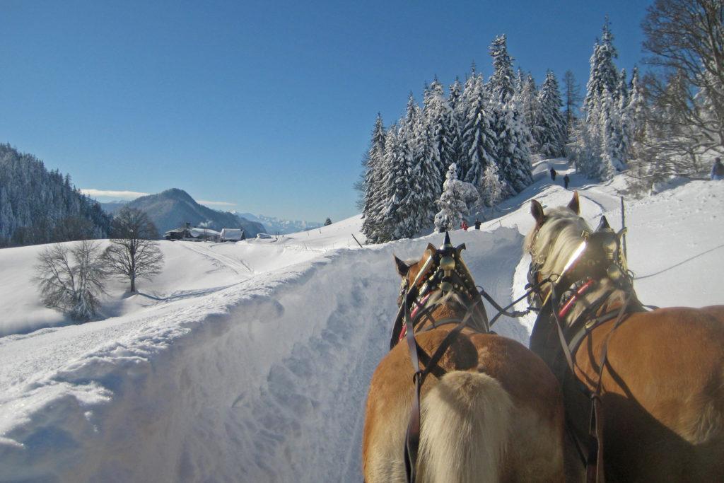 Ferchtlhof Ramsau Bildergalerie Pferdeschlittenfahrt