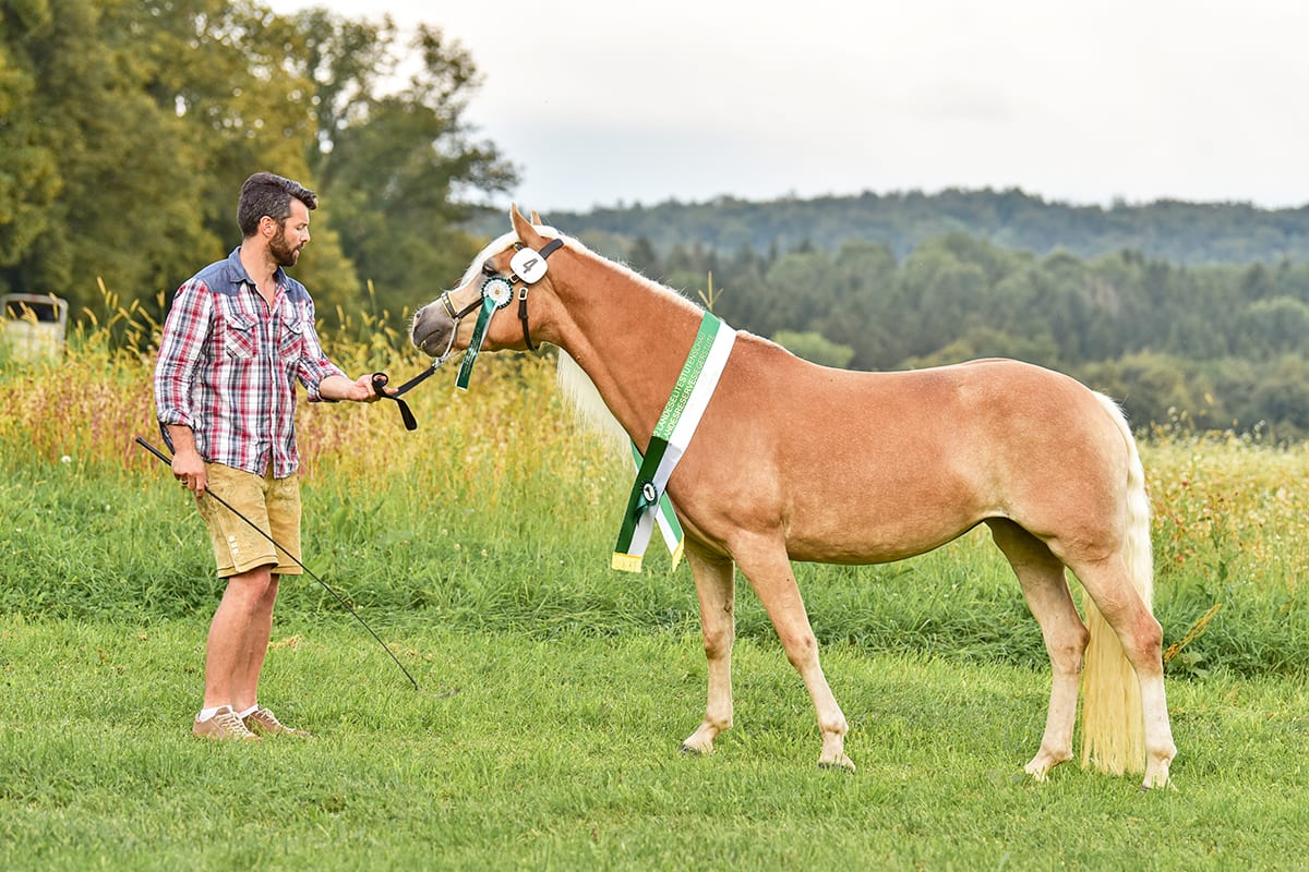 Ferchtlhof Ramsau Pferdezucht01