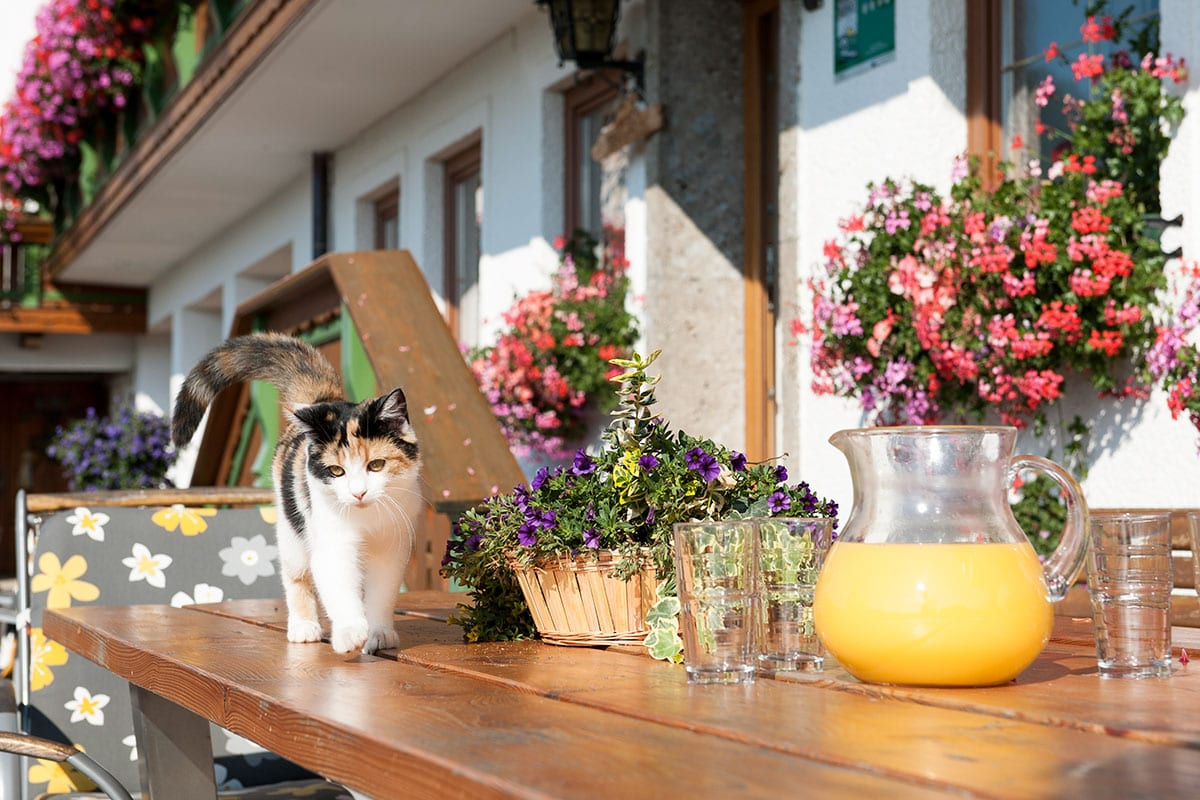 Katze - Familienurlaub in Ramsau am Dachstein