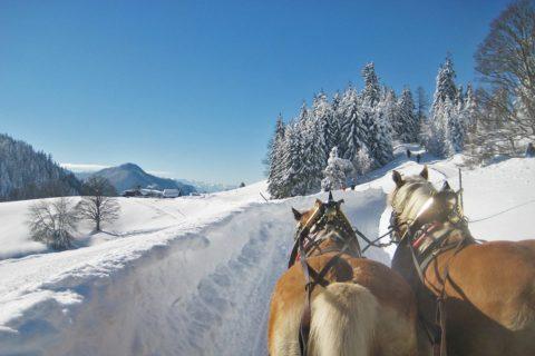 Ferchtlhof Ramsau Haflingerzucht Winter