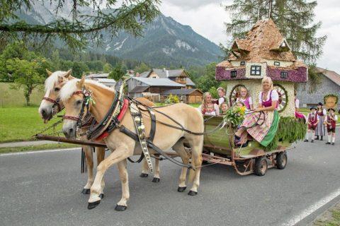 Ferchtlhof Ramsau Haflingerzucht02