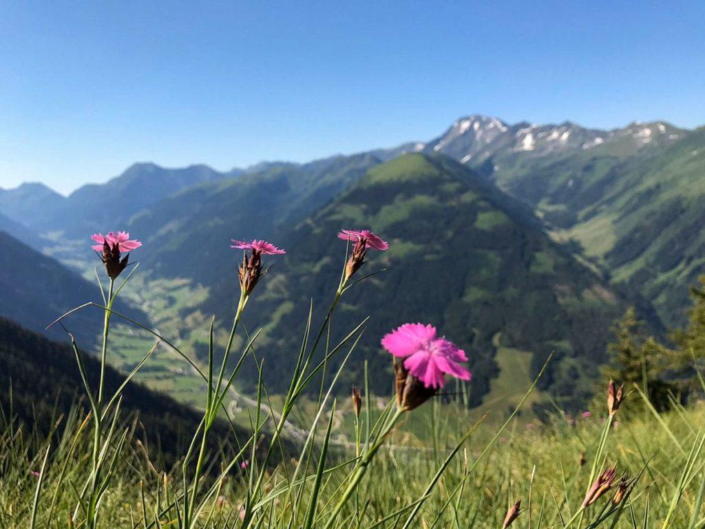 Sommerurlaub am Ferchtlhof in Ramsau, Dachstein